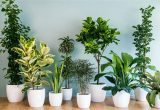 Green Plants to decorate your home and office